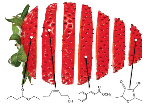 http://cocina-molecular.com/images/strawberry_485.jpg